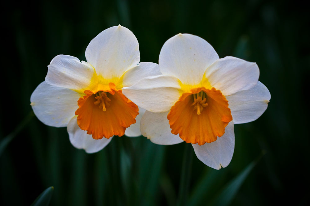 The Poet's Narcissus