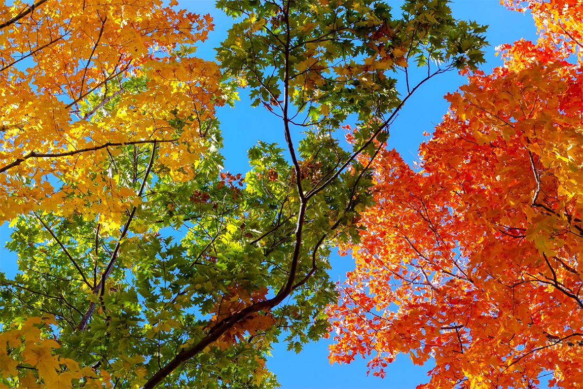 Look Up! Fall Colors
